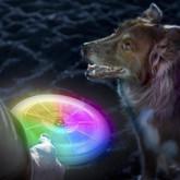 Nite Ize Flashflight Dog Discuit Disc-O LED Flying Disc with dog