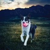 Nite Ize GlowStreak Red LED Dog Ball