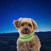 Nite Ize NiteDog Rechargeable LED Collar green feature
