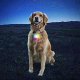 Nite Ize SpotLit Collar Light feature disco