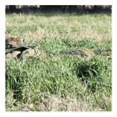 Red Rock Outdoor Gear 5'x12' Ghillie Blind Camo Netting