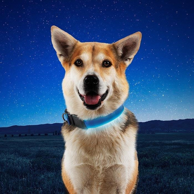Nite Ize NiteDog Rechargeable LED Collar blue feature