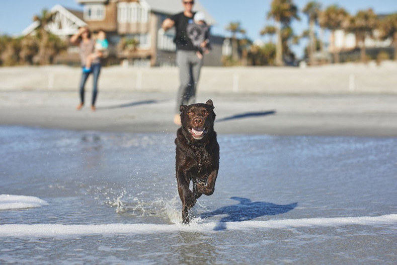 Off-Leashing at the Beach with Monster