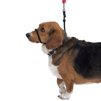 "Head Halter Only Style. MUST USE YOUR OWN LEASH!!! Please select ""Giant Breed"" If applicable!"