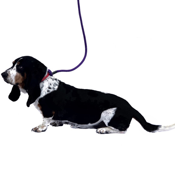 """Let's Go Rover"" Tangle Free Leash"