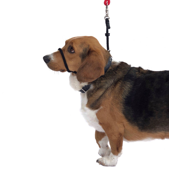 """Head Halter Only Style. MUST USE YOUR OWN LEASH!!! Please select """"Giant Breed"""" If applicable!"""