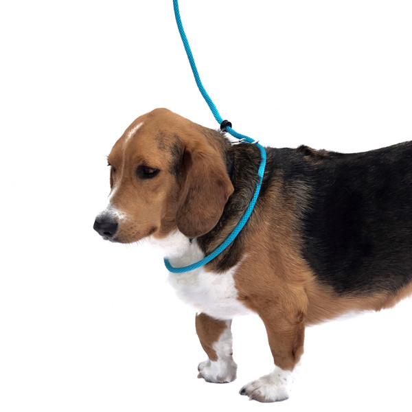 "Instructions: Step One Put loop over head like a slip lead  and attach safety snap to ""D"" ring on dog's collar"