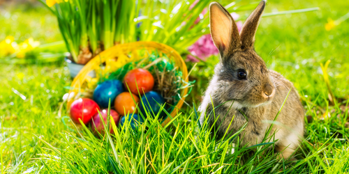 What Will The Easter Bunny Bring?