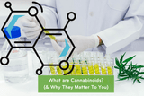 What Is A Cannabinoid? Understanding The Importance Of Cannabinoids