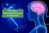 What Is the Endocannabinoid System? Introduction To The Human Endocannabinoid System