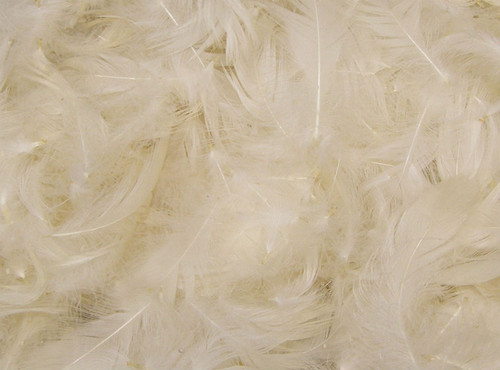Feathers - close up