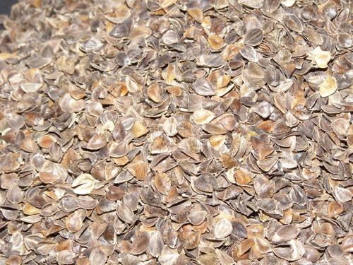 Buckwheat Hulls - close up