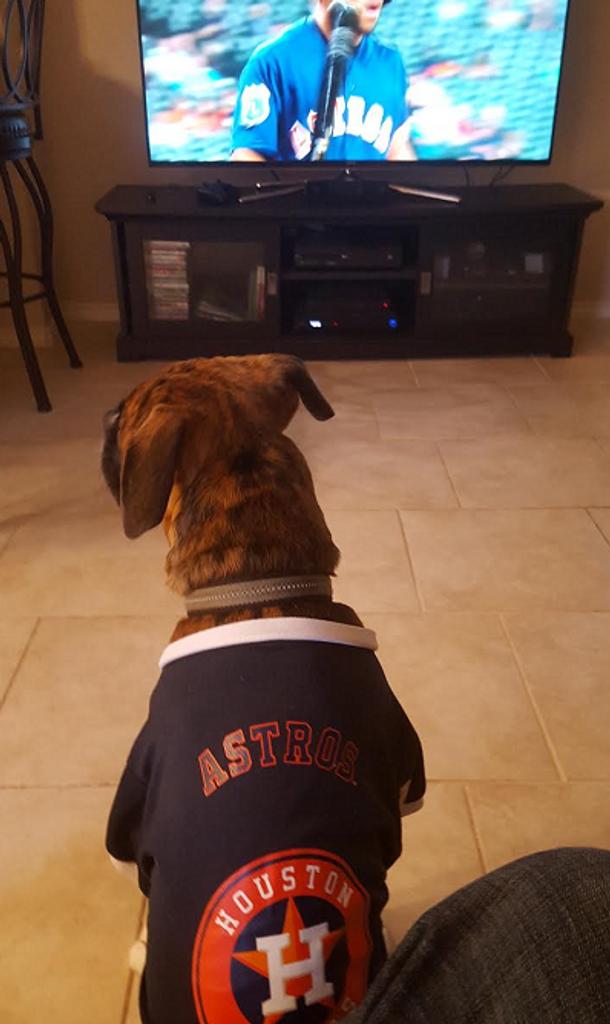 dbfbff749 Houston Astros Dog Pet Premium Baseball Jersey Alternate - Spawty