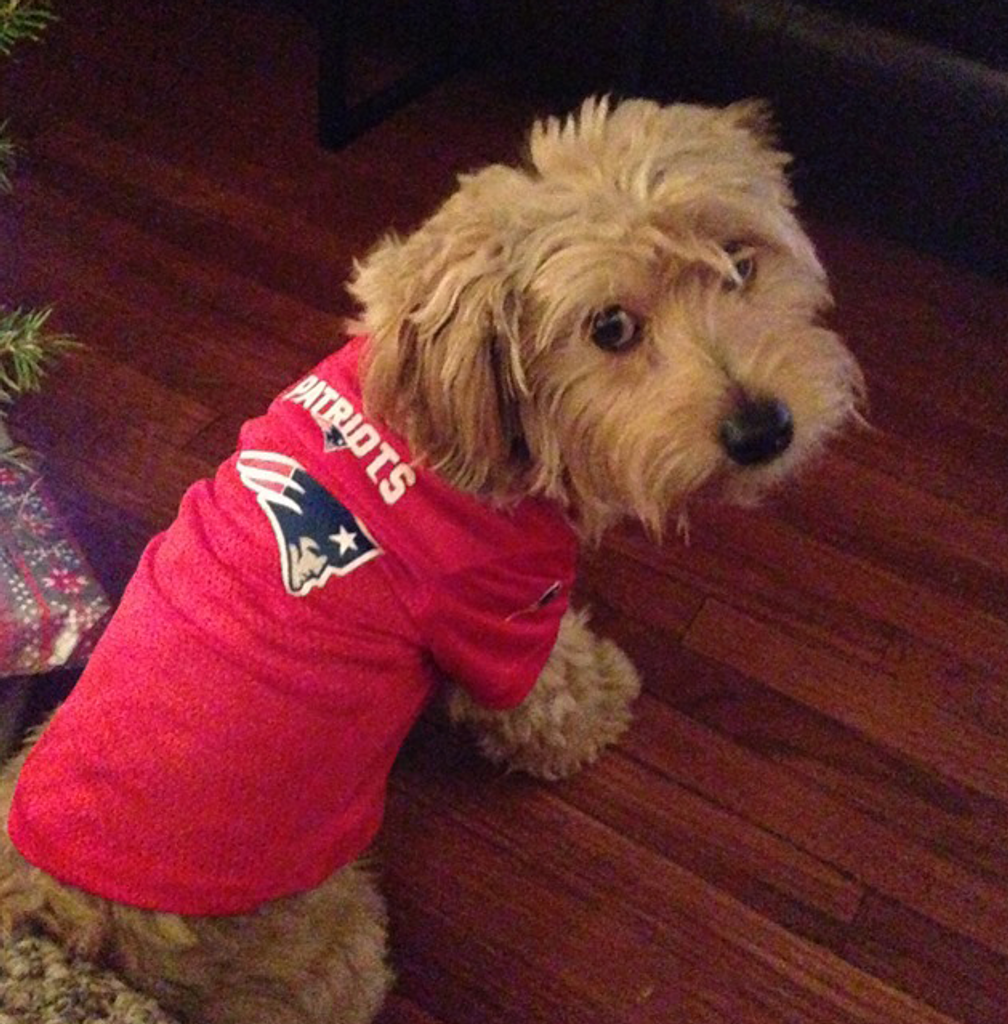 a3d70373438 New England Patriots Dog Pet Mesh Alternate Football Jersey Red - Spawty