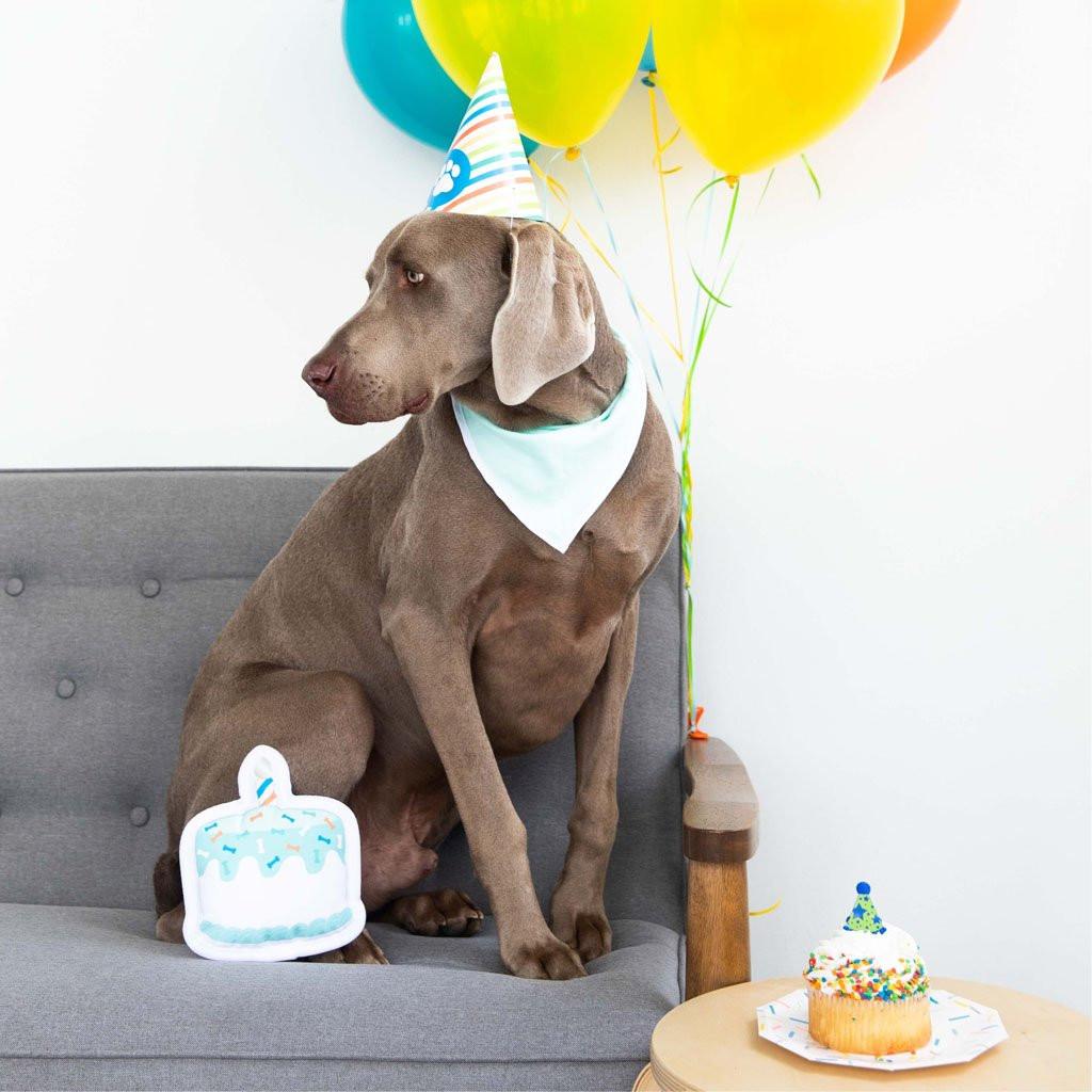 Pet Dog Happy Birthday Kit Cake Toy Party Hat Premium Cotton Bandana