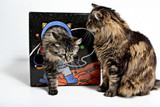 Outer Space Theme Designer Cat Kitty Cardboard Box Play House