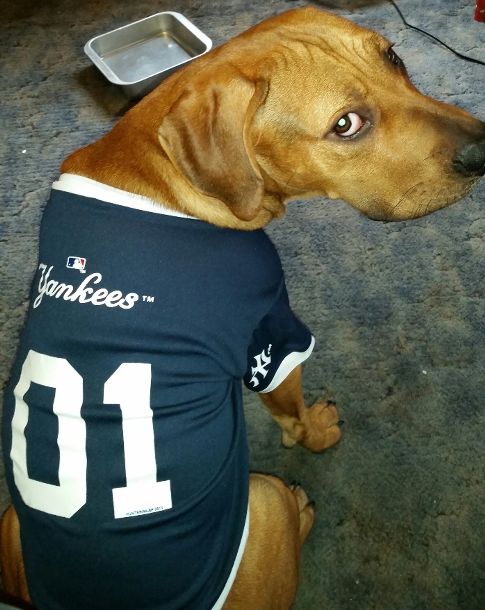 check out 4cad7 29f17 New York Yankees Dog Pet Baseball Jersey