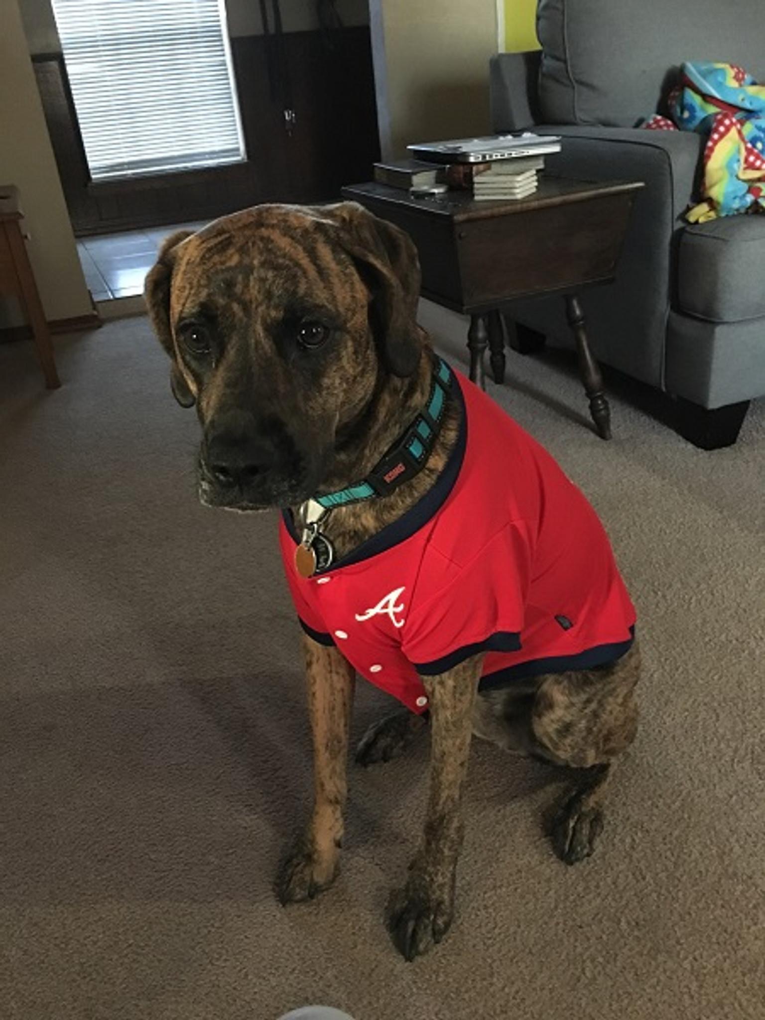 Dallas Cowboys Pet Dog Football Jersey Alternate SMALL