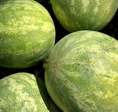Tropical Melons