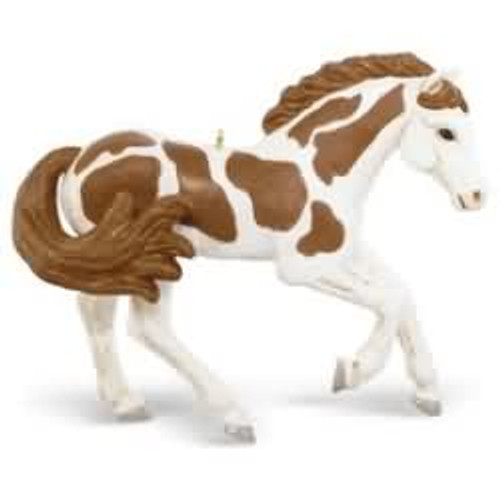2016 American Paint Horse