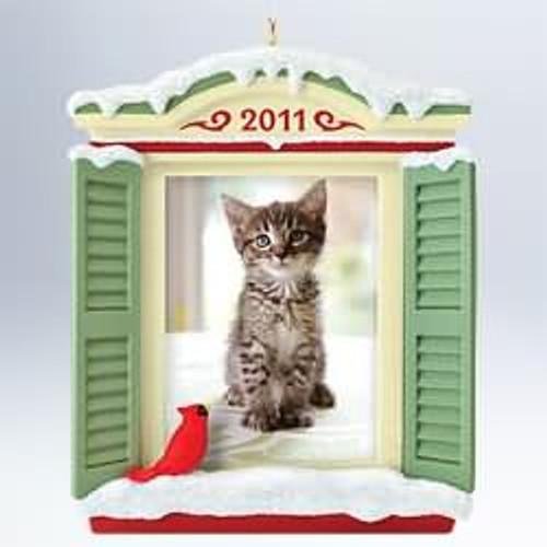 2011 Picture Purr-fect! - Cat Photo