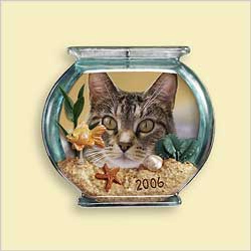 2006 Special Cat - Photo
