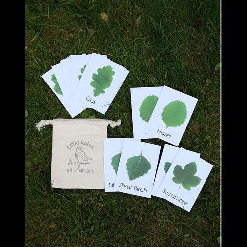 Leaf Flash Cards
