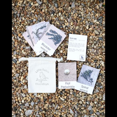 Beach Fact Cards