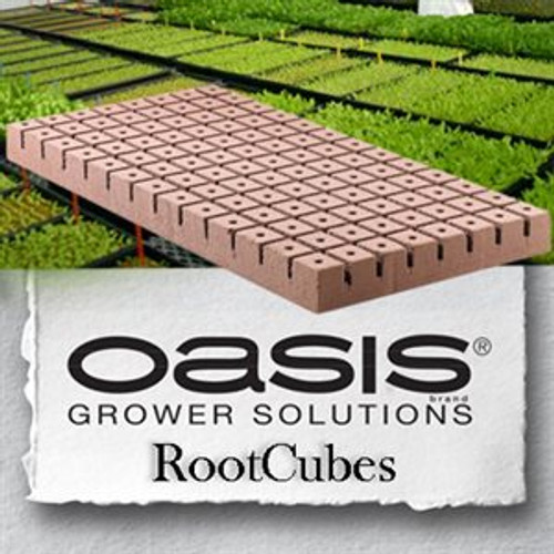 Oasis RootCubes