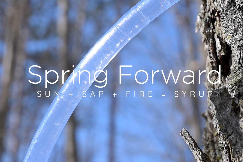 Sun + Sap + Fire
