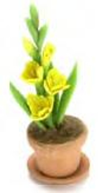Gladiolus Clay Pot - Yelow