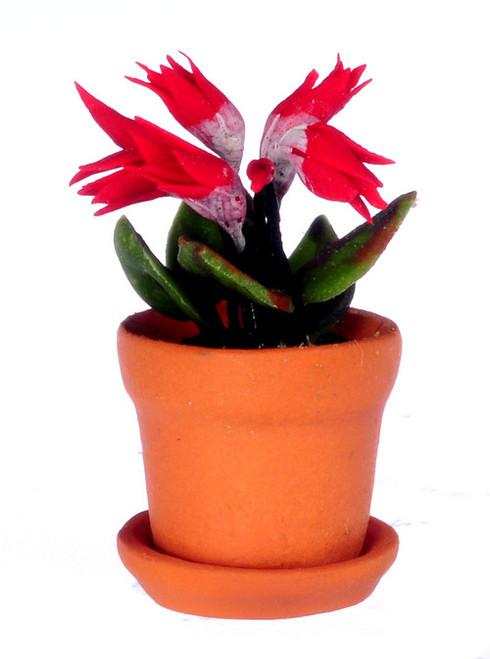 Cyclamen in Pot - Red