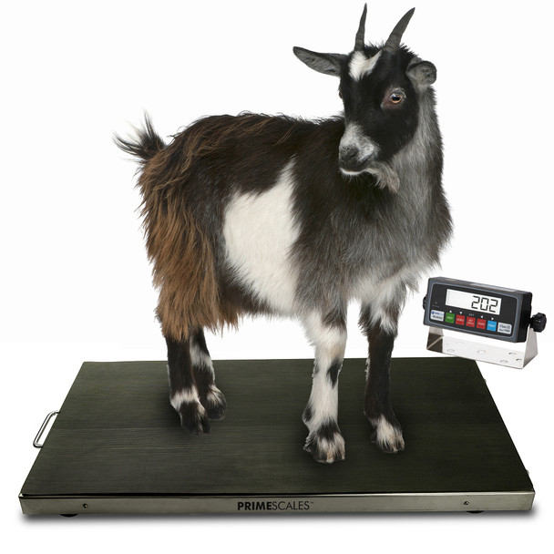 PS-AS700 #animalscale Veterinary Scale