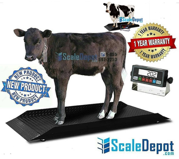 Weighing the animals is critical in any farm. Accurate weighing helps in keeping a check on the health of animals at different stages of their growth. Livestock scales come in handy for optimizing the performance of your animals.  Here are 5 reasons why regular livestock weighing is critical on your farm.  Identifies Optimal Breeding Time One critical decision that has to be made in any livestock farm pertains to breeding. Based on the health of the herd and animals' weight, you can easily identify the optimal time for the farm animals to breed. You can help in preventing complications in the future and with the weight data collected, you can make better, informed decisions that will guarantee healthier calves in the herd.  Helps in Determining Feed Quantity You need to constantly weigh your animals to check whether they are healthy or not. The data collected after weighing them will give you a better understanding of when to increase or reduce their feed. The data can also be used to suggest any changes in the diet or recommend more nutrients. Having the right feed conversion rate will help you come up with the right food proportions that will help in achieving particular growth rates within a set period of time  Easy Monitoring of Animals' Health It is critical to maintain healthy animals on your farm, which is also one of the most challenging tasks. However, this can be made a little simple by investing in livestock weighing scales as they can easily monitor the health of the animals. They help in detecting sudden weight loss which can be indicative of a serious disease or health condition. If a health concern is detected, visit a veterinarian and get the right treatment before the disease spreads to other animals.  Helps in Picking the Weaning Time Weigh the calves in the livestock as well because making the decision on weaning determines how well the calves are integrated into the herd. Moreover, you can predict the future growth of the calves by analyzing the captured data and studying the performance graph. This data helps in determining the performance of your herd.  Evaluates Breeding Performance By regularly weighing the animals, you can easily determine the right breed for your farm. The breeds which add weight constantly are preferred for breeding as they guarantee healthier calves and a higher return on investment. You can even decide to produce a cross-breed of the healthiest animals based on the weighing data that is collected over time.  Regular livestock weighing also helps in reducing the impact of the livestock price volatility on the business by maximizing output and reducing cost and waste. You can achieve price premiums by meeting your livestock buyer's specifications.
