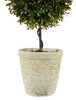 Spring Boxwood Double Ball Topiary 24""