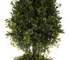 Spring Boxwood Ball Cone Topiary 34""
