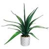 "Aloe Pot 22"""