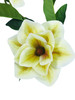 "Magnolia Bloom Spray x 3 38"" Cream Green Set of 3 Stems"