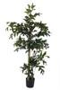 6' Fishtail Palm Tree