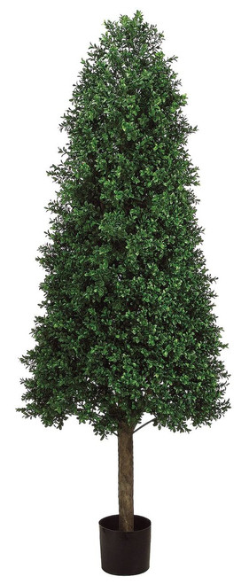 5.5ft Cone Shape Boxwood Topiary in Plastic Pot