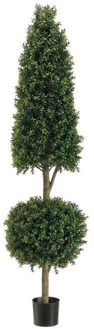 6ft Cone-Ball Shape Boxwood Topiary in Plastic Pot