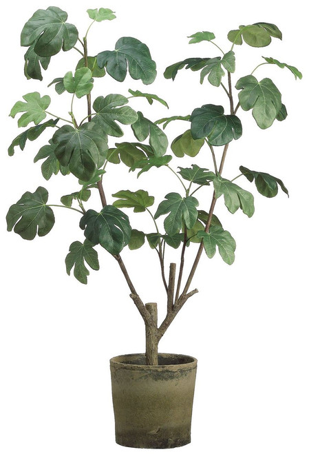 """48"""" Fig Plant in Clay Pot Green"""