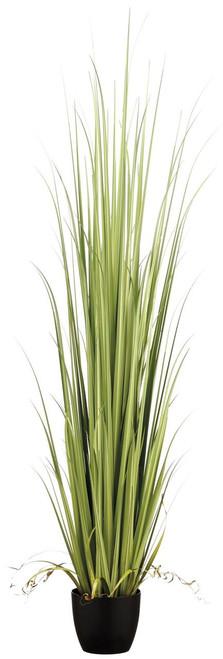 """84"""" Reed Grass in Pot Light Green"""