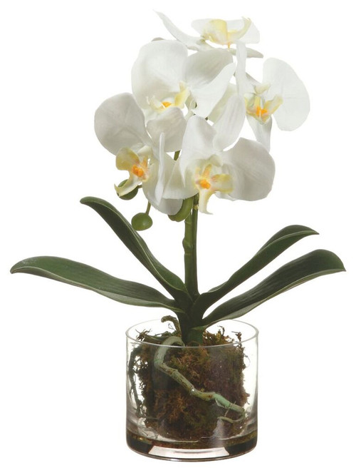 "13"" Phalaenopsis Orchid Plant in Glass Vase White"