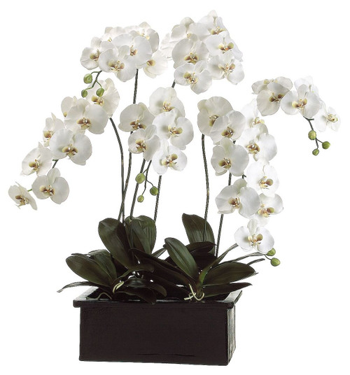 "42"" Phalaenopsis Orchid Planter in Terra Cotta Pot White Green"