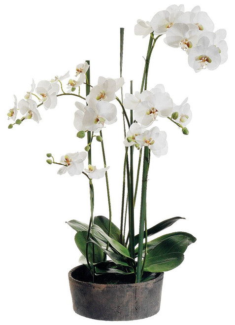 "37"" Phalaenopsis Orchid Plant in Clay Pot Cream Green"