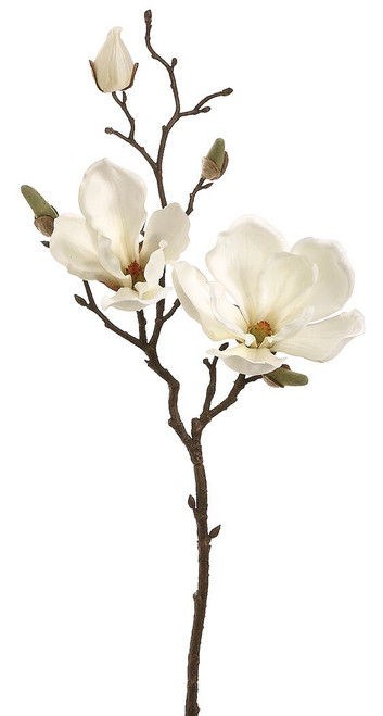 "19"" Magnolia Spray Cream Box of 12"