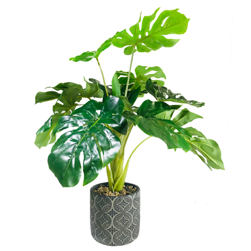 """Tortoise Back Leaf Pot 23.5"""""""