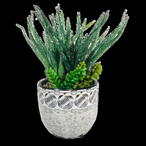 """Succulent Aloe Pot 9.5"""""""