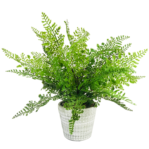 Lace Fern Pot 13.5""
